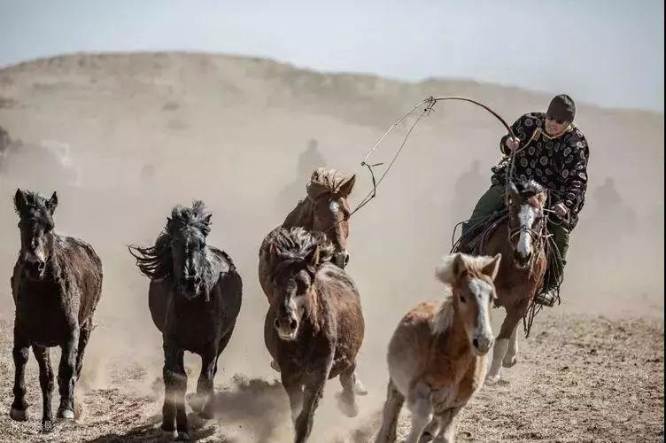 """阿巴嘎""""阿都沁""""马文化那达慕:马背上的文化传承(组图) 第28张"""