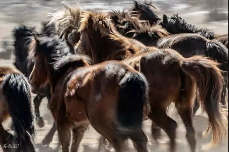 """阿巴嘎""""阿都沁""""马文化那达慕:马背上的文化传承(组图) 第30张"""