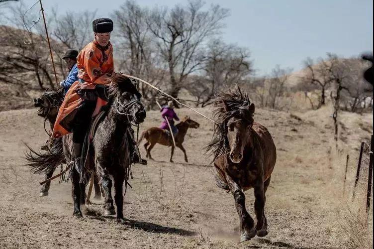 """阿巴嘎""""阿都沁""""马文化那达慕:马背上的文化传承(组图) 第33张"""
