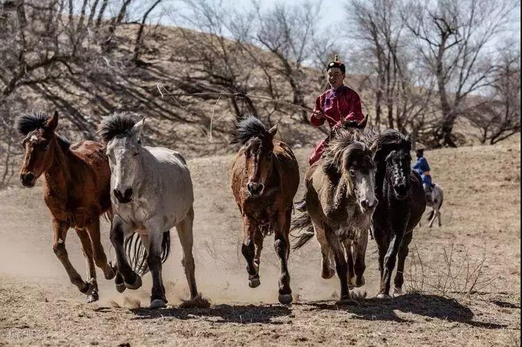 """阿巴嘎""""阿都沁""""马文化那达慕:马背上的文化传承(组图) 第35张"""