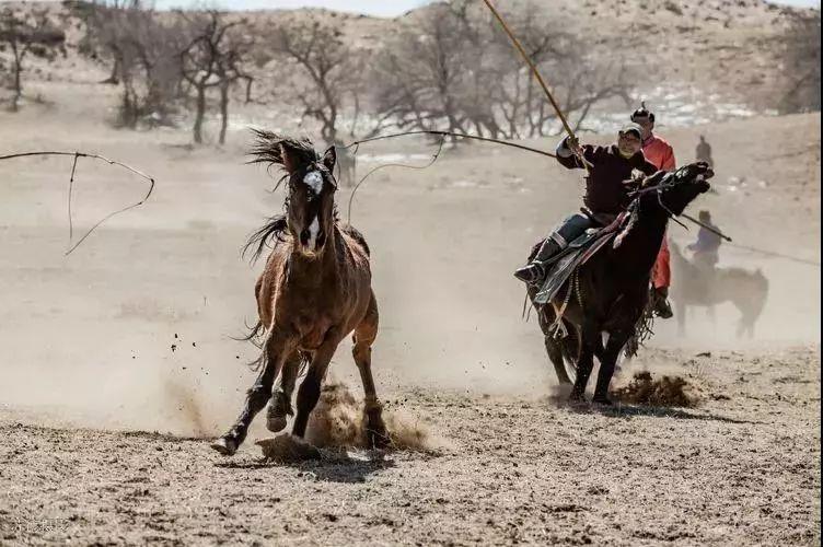 """阿巴嘎""""阿都沁""""马文化那达慕:马背上的文化传承(组图) 第36张"""