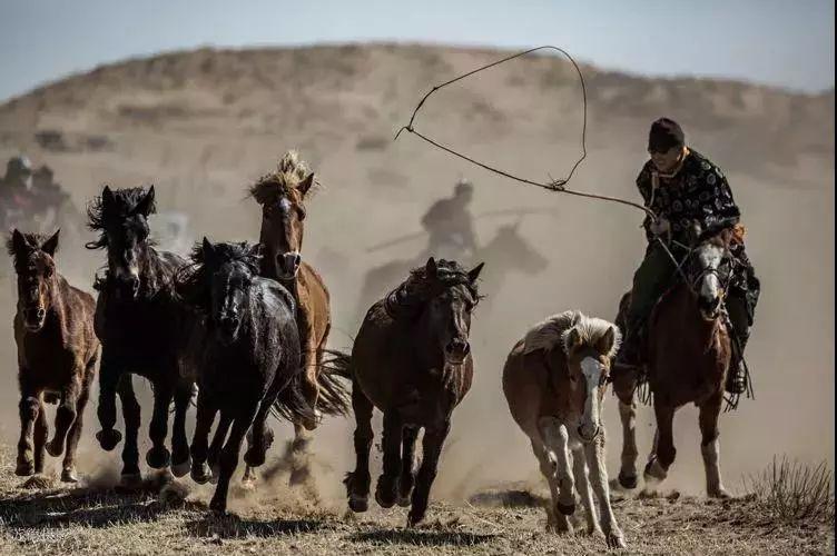 """阿巴嘎""""阿都沁""""马文化那达慕:马背上的文化传承(组图) 第37张"""