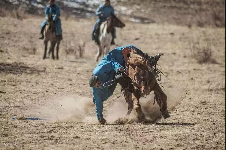 """阿巴嘎""""阿都沁""""马文化那达慕:马背上的文化传承(组图) 第41张"""