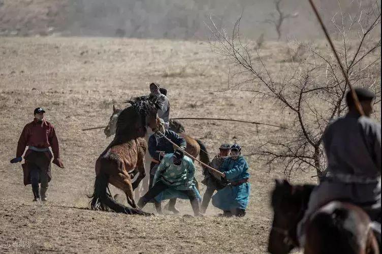 """阿巴嘎""""阿都沁""""马文化那达慕:马背上的文化传承(组图) 第47张"""
