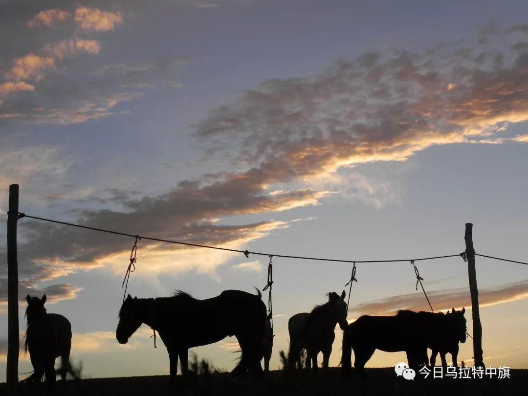 乌拉特文化 — 与马有关的禁忌 第1张