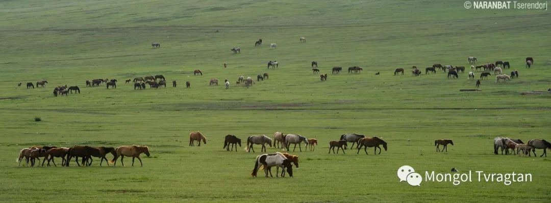 ᠮᠣᠩᠭᠤᠯ ᠰᠡᠭᠦᠳᠡᠷ- ᠴ᠂ ᠨᠠᠷᠠᠨᠪᠠᠲᠤ 第35张 ᠮᠣᠩᠭᠤᠯ ᠰᠡᠭᠦᠳᠡᠷ- ᠴ᠂ ᠨᠠᠷᠠᠨᠪᠠᠲᠤ 蒙古文化
