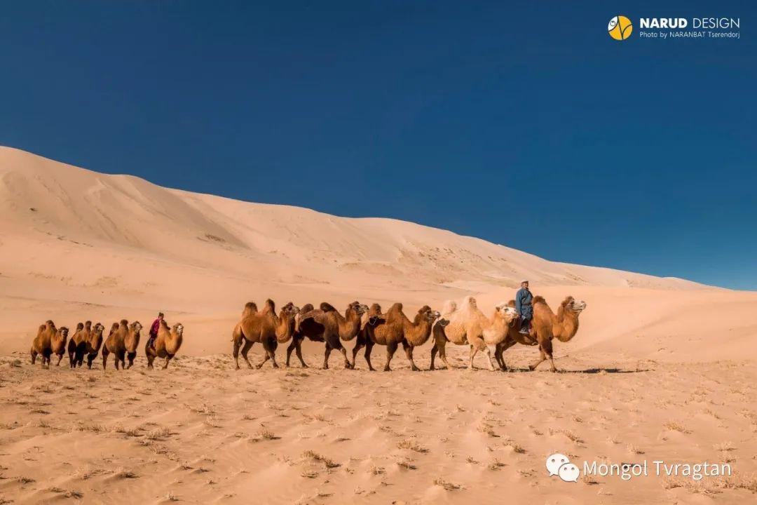 ᠮᠣᠩᠭᠤᠯ ᠰᠡᠭᠦᠳᠡᠷ- ᠴ᠂ ᠨᠠᠷᠠᠨᠪᠠᠲᠤ 第54张 ᠮᠣᠩᠭᠤᠯ ᠰᠡᠭᠦᠳᠡᠷ- ᠴ᠂ ᠨᠠᠷᠠᠨᠪᠠᠲᠤ 蒙古文化