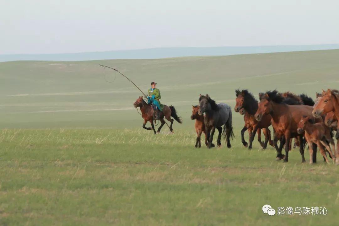 牧民摄影师宝音吉雅摄影作品欣赏 第9张 牧民摄影师宝音吉雅摄影作品欣赏 蒙古文化