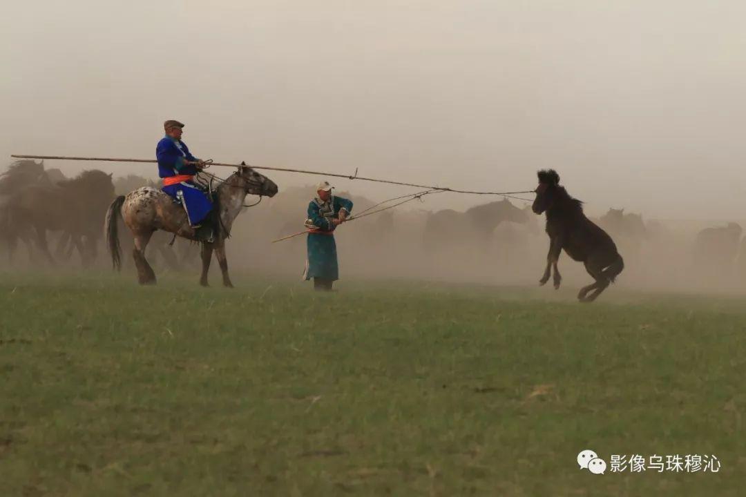 牧民摄影师宝音吉雅摄影作品欣赏 第16张 牧民摄影师宝音吉雅摄影作品欣赏 蒙古文化