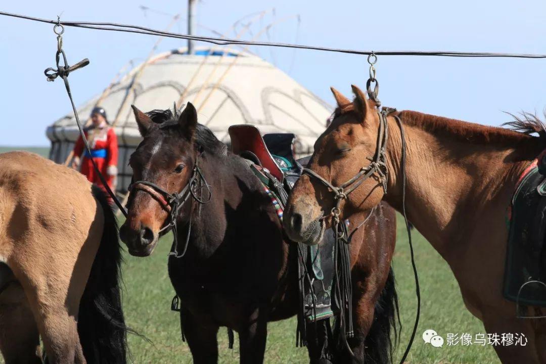 牧民摄影师宝音吉雅摄影作品欣赏 第23张 牧民摄影师宝音吉雅摄影作品欣赏 蒙古文化