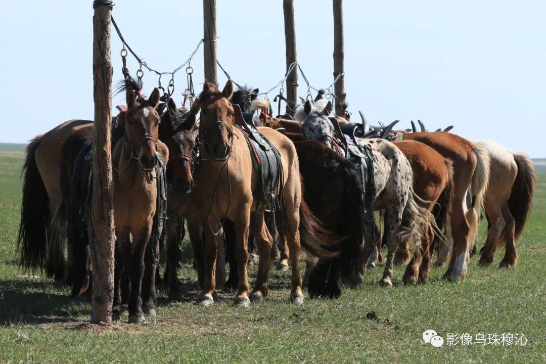 牧民摄影师宝音吉雅摄影作品欣赏 第24张 牧民摄影师宝音吉雅摄影作品欣赏 蒙古文化