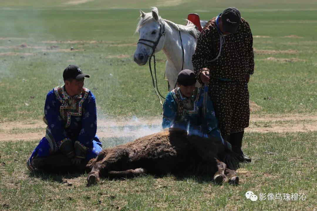 牧民摄影师宝音吉雅摄影作品欣赏 第31张 牧民摄影师宝音吉雅摄影作品欣赏 蒙古文化