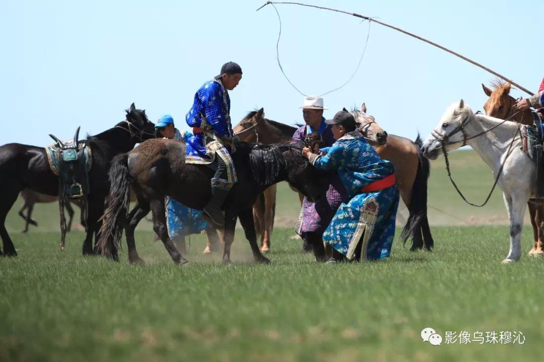 牧民摄影师宝音吉雅摄影作品欣赏 第32张 牧民摄影师宝音吉雅摄影作品欣赏 蒙古文化