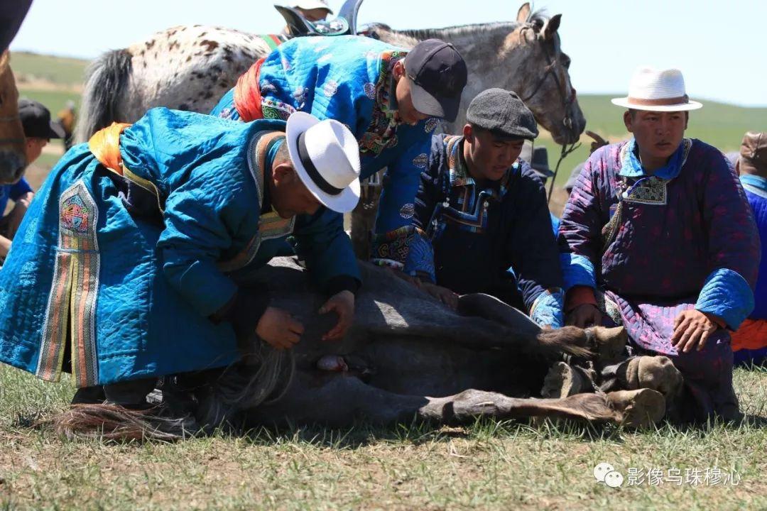 牧民摄影师宝音吉雅摄影作品欣赏 第40张 牧民摄影师宝音吉雅摄影作品欣赏 蒙古文化