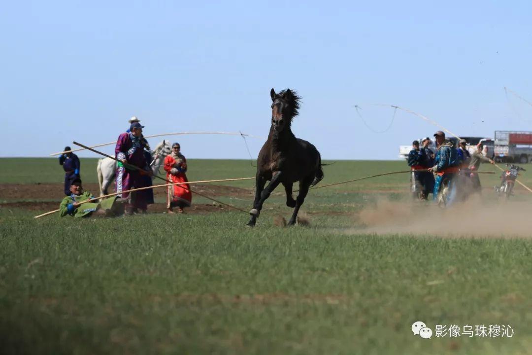 牧民摄影师宝音吉雅摄影作品欣赏 第43张 牧民摄影师宝音吉雅摄影作品欣赏 蒙古文化