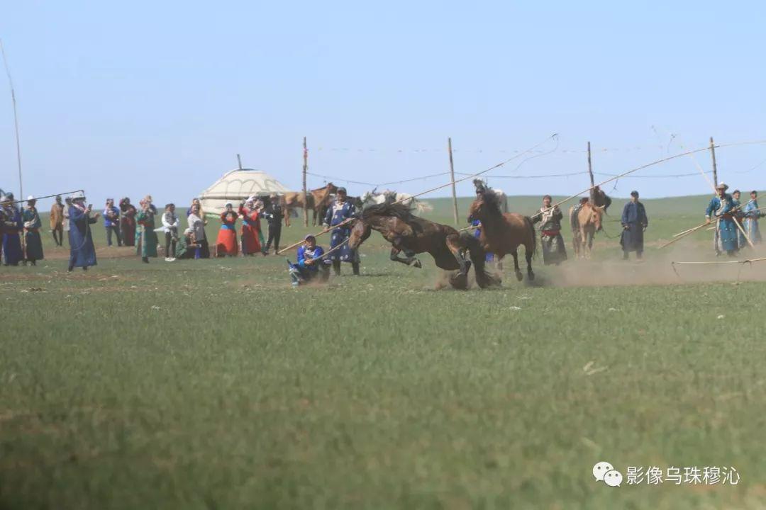 牧民摄影师宝音吉雅摄影作品欣赏 第42张 牧民摄影师宝音吉雅摄影作品欣赏 蒙古文化