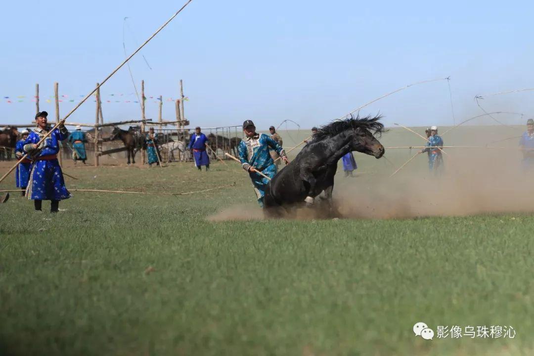 牧民摄影师宝音吉雅摄影作品欣赏 第44张 牧民摄影师宝音吉雅摄影作品欣赏 蒙古文化