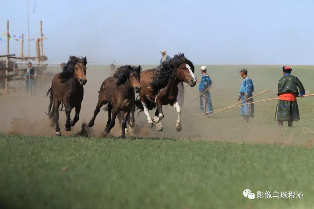 牧民摄影师宝音吉雅摄影作品欣赏 第48张 牧民摄影师宝音吉雅摄影作品欣赏 蒙古文化