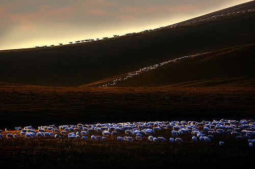 美丽的草原我的家「摄影美图」 第12张
