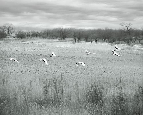 美丽的草原我的家「摄影美图」 第19张
