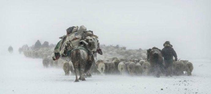 保加利亚摄影师镜头下的蒙古游牧生活 ... 第8张 保加利亚摄影师镜头下的蒙古游牧生活 ... 蒙古文化