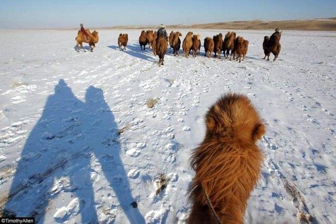 保加利亚摄影师镜头下的蒙古游牧生活 ... 第12张 保加利亚摄影师镜头下的蒙古游牧生活 ... 蒙古文化