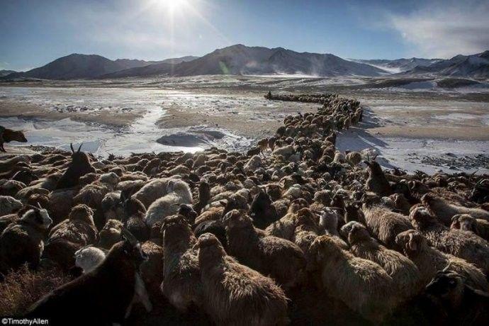 保加利亚摄影师镜头下的蒙古游牧生活 ... 第17张 保加利亚摄影师镜头下的蒙古游牧生活 ... 蒙古文化