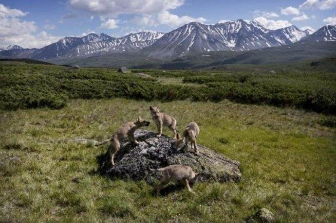 保加利亚摄影师镜头下的蒙古游牧生活 ... 第21张 保加利亚摄影师镜头下的蒙古游牧生活 ... 蒙古文化