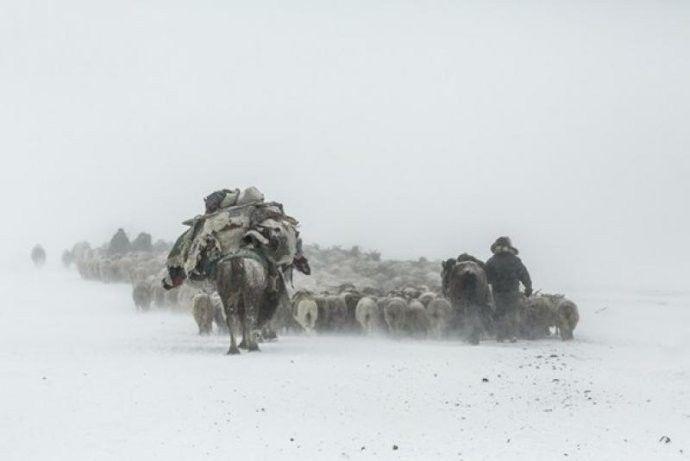 保加利亚摄影师镜头下的蒙古游牧生活 ... 第22张 保加利亚摄影师镜头下的蒙古游牧生活 ... 蒙古文化