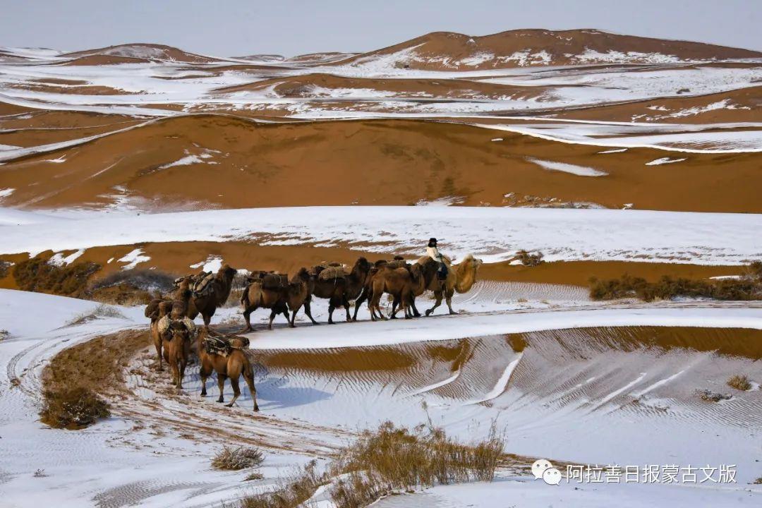 沙金达来摄影作品:沙漠之舟