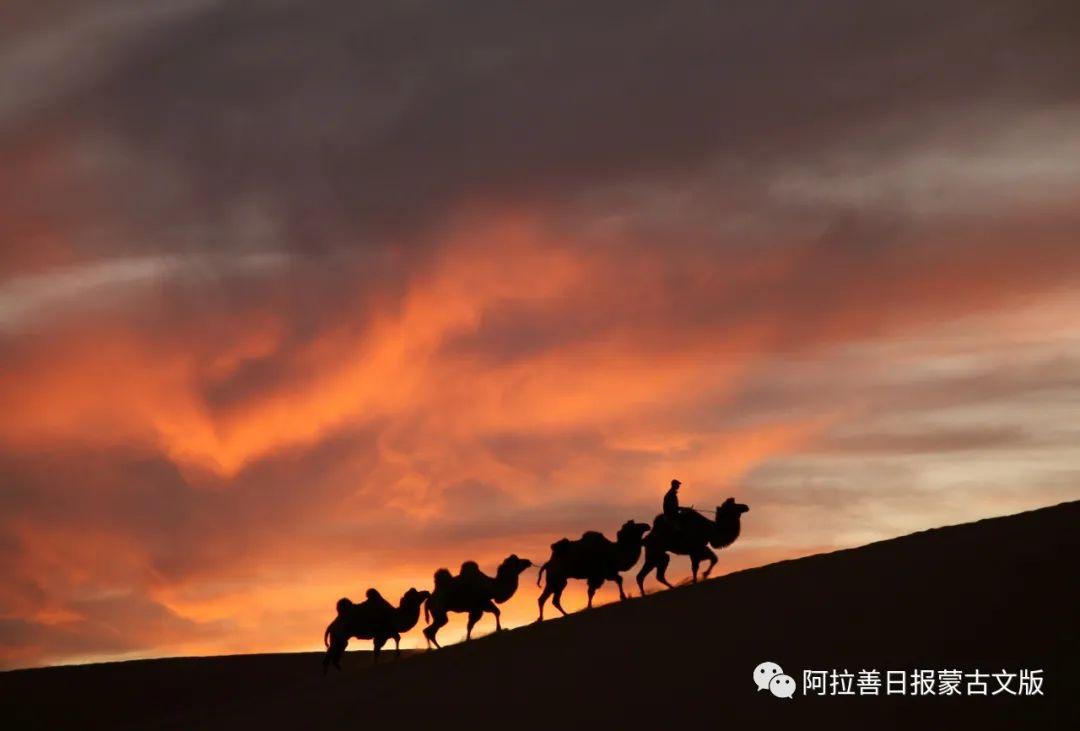 沙金达来摄影作品:沙漠之舟 第2张