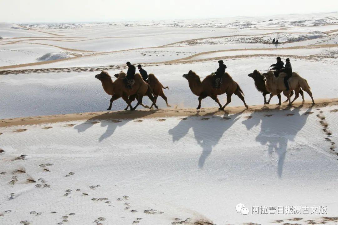 沙金达来摄影作品:沙漠之舟 第8张