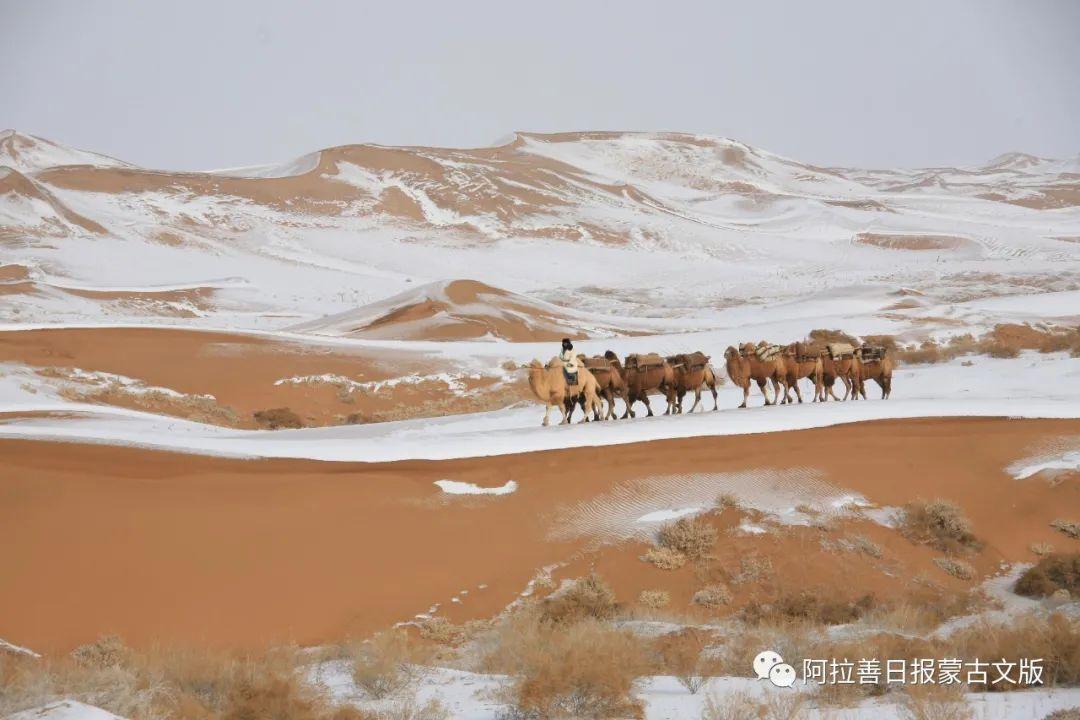 沙金达来摄影作品:沙漠之舟 第10张