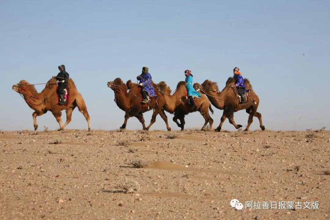 沙金达来摄影作品:沙漠之舟 第15张