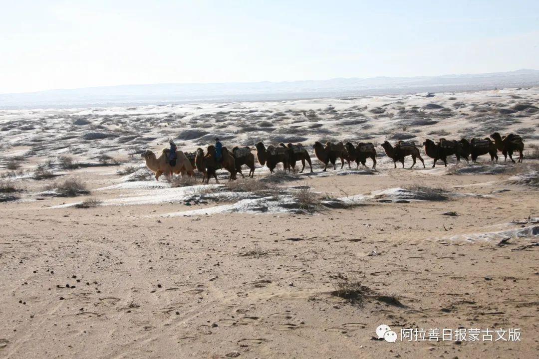 沙金达来摄影作品:沙漠之舟 第13张