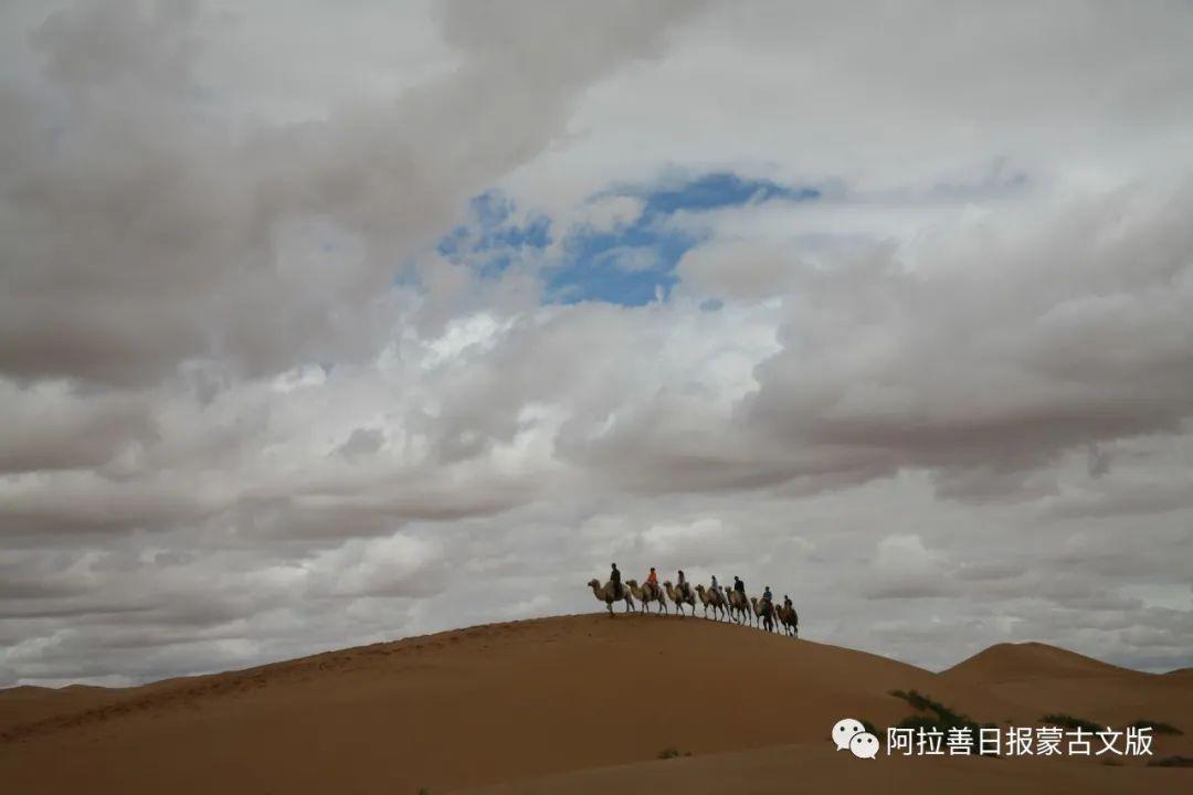 沙金达来摄影作品:沙漠之舟 第18张