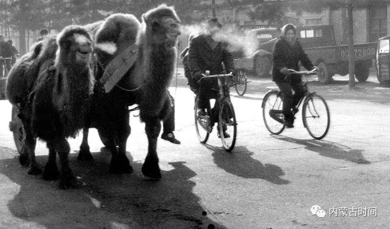 一组很多人没见过的内蒙古老照片:画面上的历史最动人 第17张