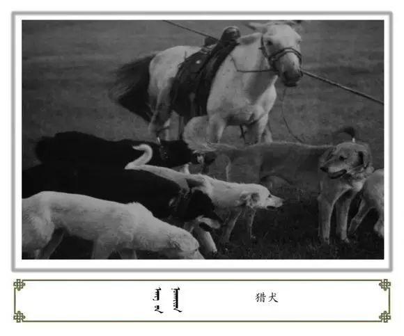 内蒙古阿巴嘎旗老照片欣赏 第18张