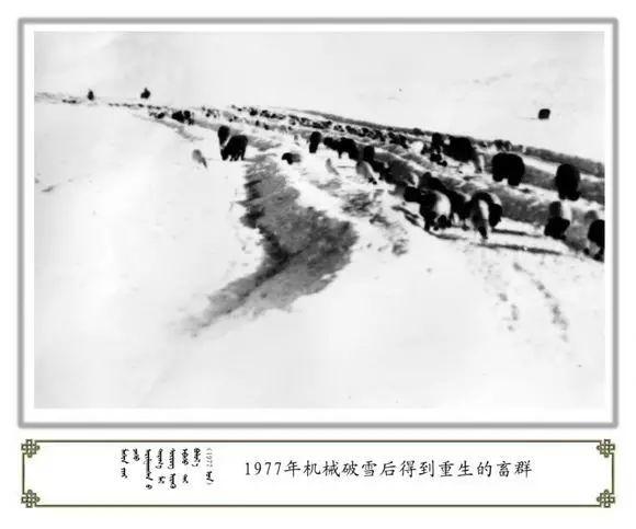内蒙古阿巴嘎旗老照片欣赏 第23张