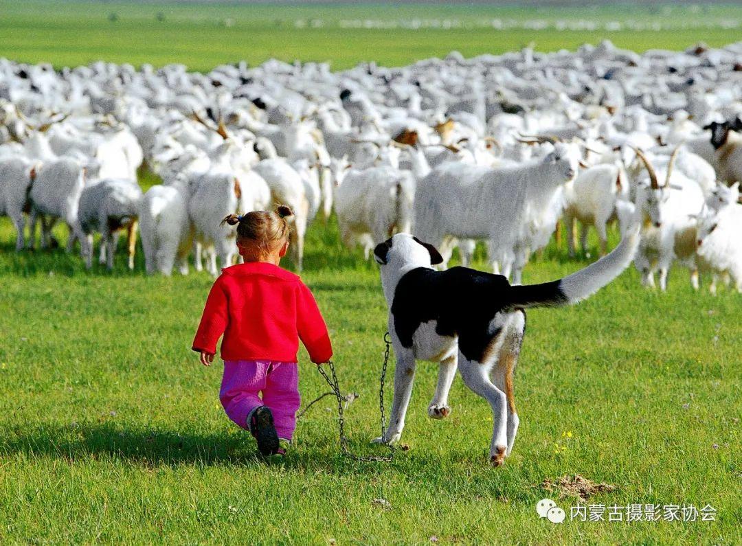 内蒙古摄影家协会原副主席王金摄影作品赏析 第3张