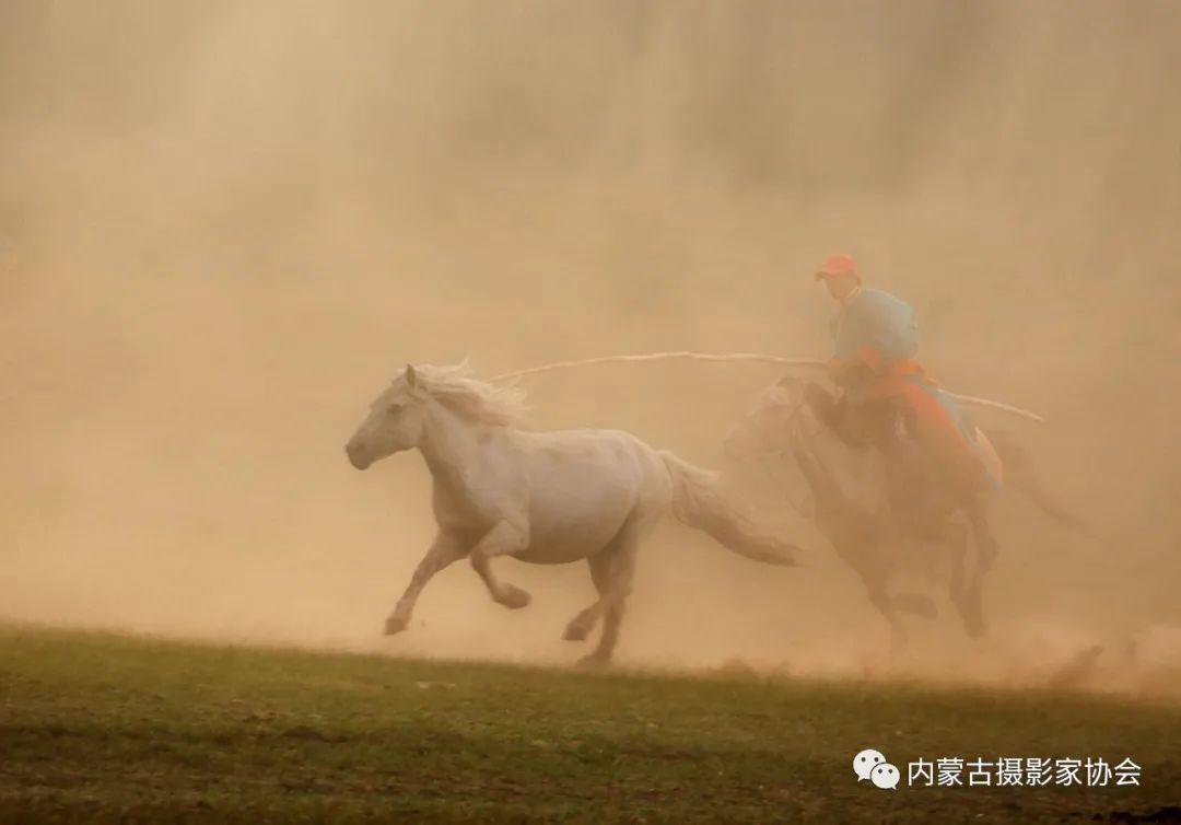 内蒙古摄影家协会原副主席王金摄影作品赏析 第4张