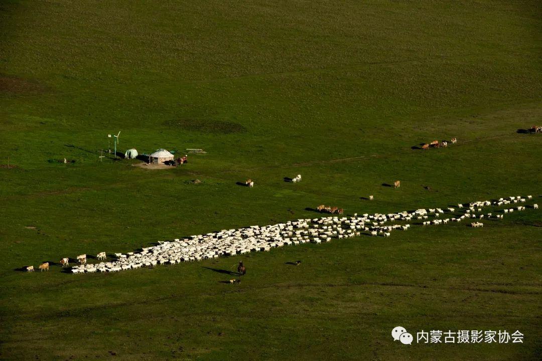 内蒙古摄影家协会原副主席王金摄影作品赏析 第10张
