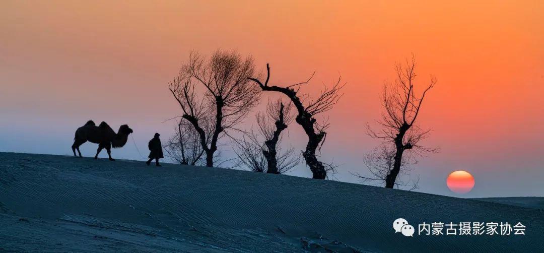 内蒙古摄影家协会原副主席王金摄影作品赏析 第14张