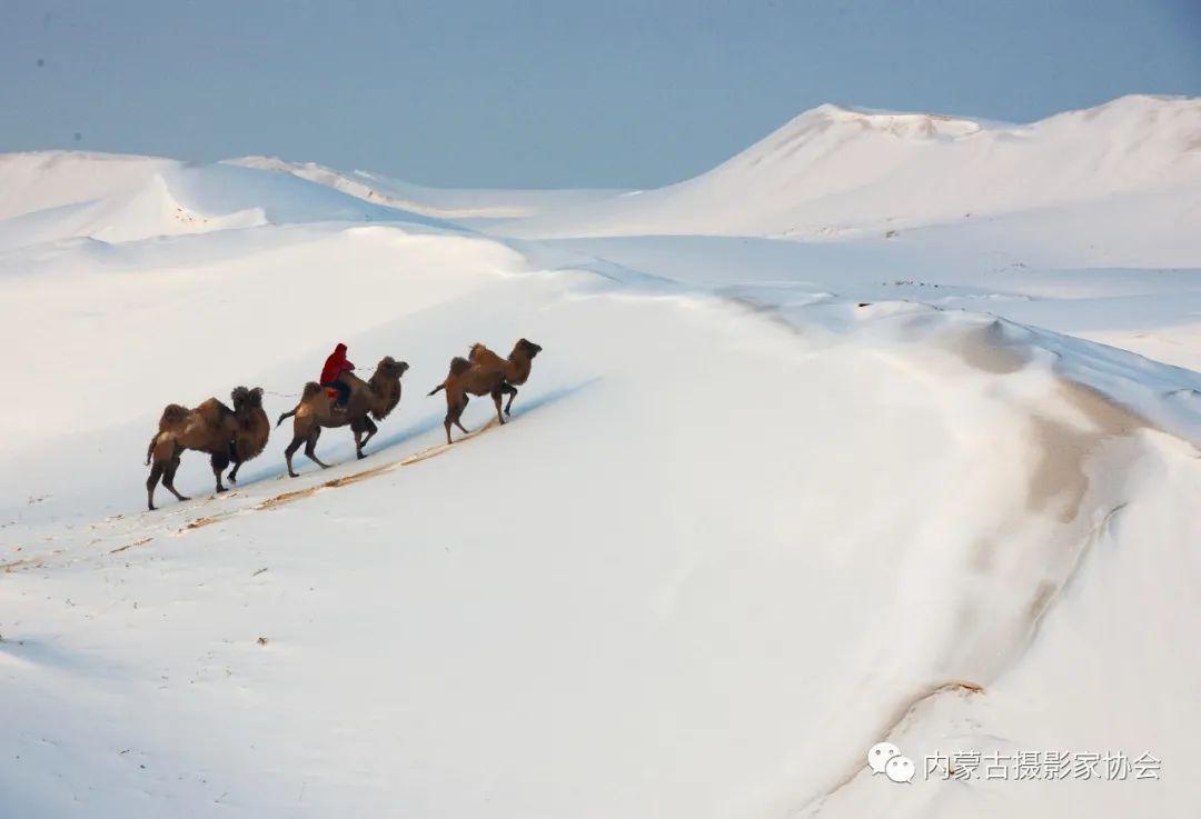 内蒙古摄影家协会原副主席王金摄影作品赏析 第16张