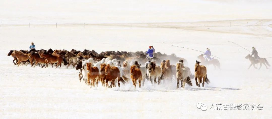 内蒙古摄影家协会原副主席王金摄影作品赏析 第18张