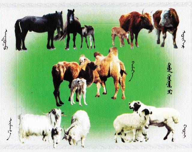 带你了解蒙古人五畜文化